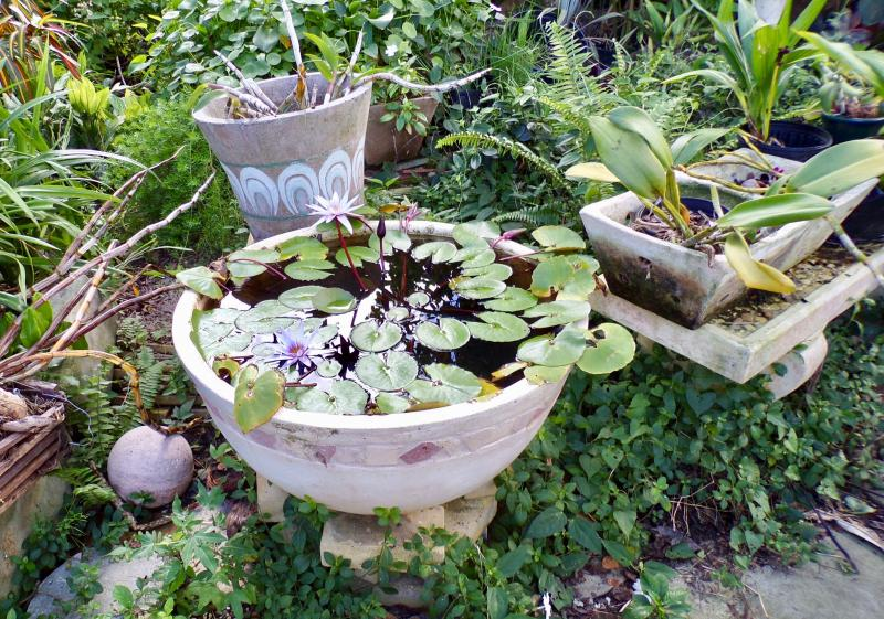 Water lily pot